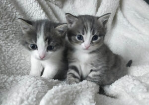 Kannatuskortti, Romeo & Rudy